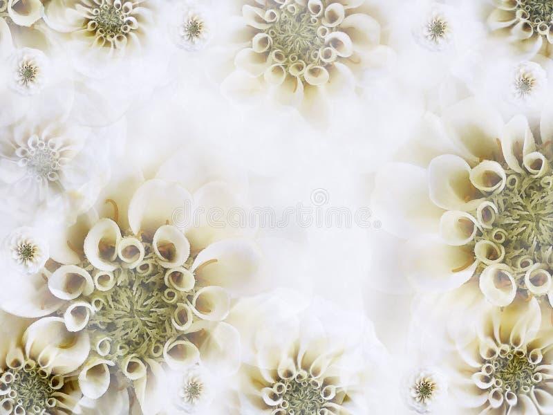 花卉白黄色美好的背景 轻的白花墙纸  背景构成旋花植物空白花的郁金香 库存照片