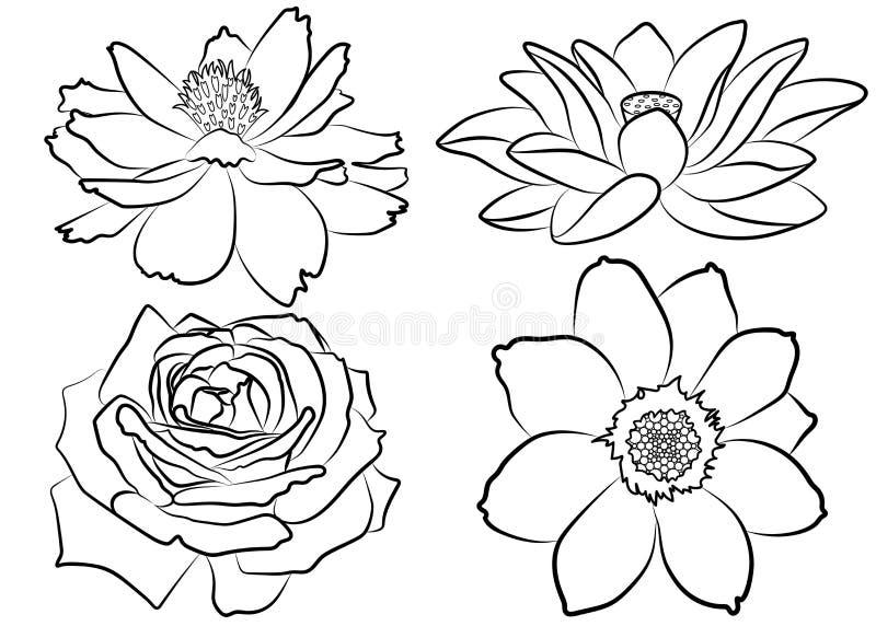 花卉着色页 向量例证