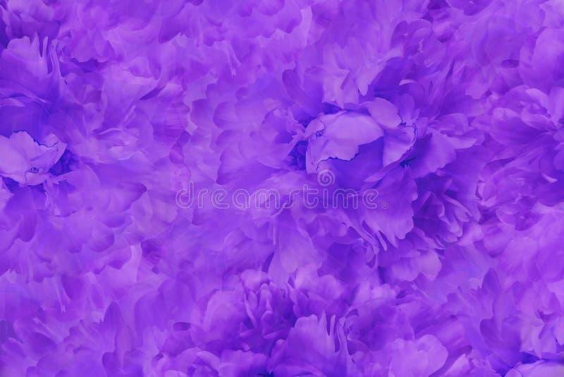 花卉紫色美好的背景 花紫罗兰色蓝色牡丹墙纸  背景构成旋花植物空白花的郁金香 特写镜头 皇族释放例证