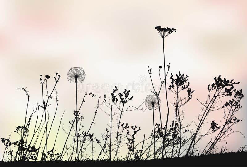 花卉背景用蒲公英-传染媒介例证 库存例证