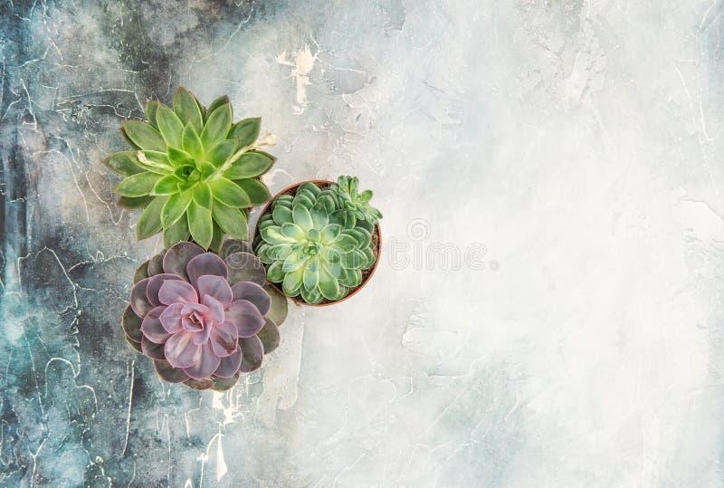 花卉舱内甲板被放置的多汁植物石背景 库存图片