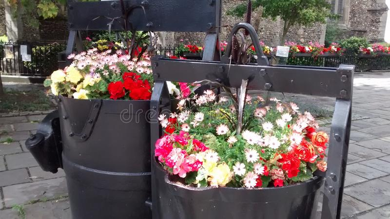 花卉萨德伯里 库存照片