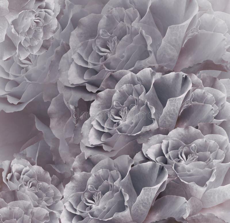花卉葡萄酒灰色桃红色美好的背景 背景构成旋花植物空白花的郁金香 花花束从灰色玫瑰的 特写镜头 图库摄影