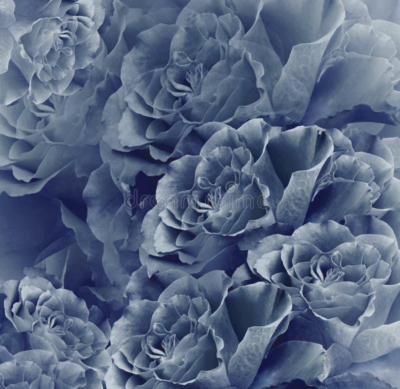 花卉葡萄酒蓝色美好的背景 背景构成旋花植物空白花的郁金香 花花束从深蓝玫瑰的 特写镜头 库存图片
