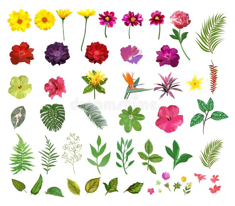 花卉装饰要素许多设置了 与被隔绝的五颜六色的手拉的庭院的汇集 向量例证