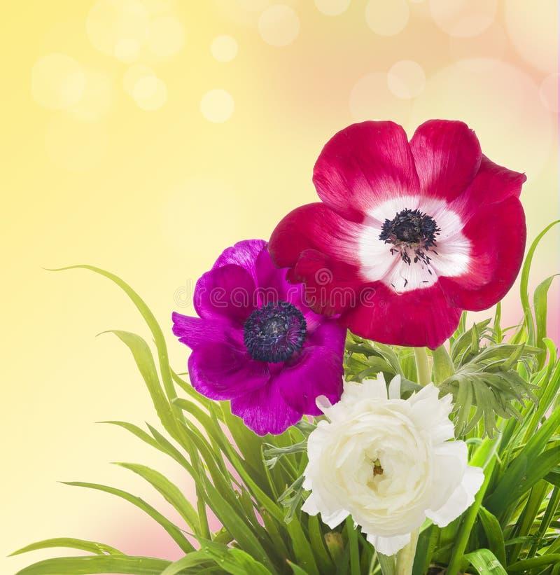 花卉边界、银莲花属和毛茛在草 库存图片