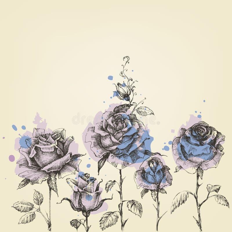 花卉边界由玫瑰做成 库存例证