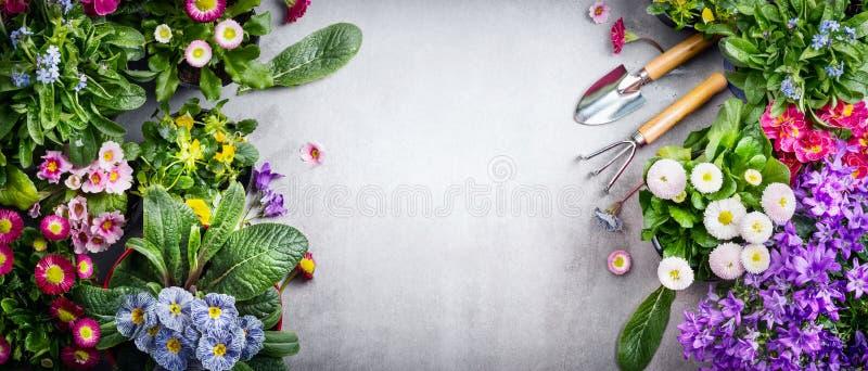花卉从事园艺的背景以五颜六色的庭院花和园艺工具品种在具体背景,顶视图,地方fo 免版税库存照片