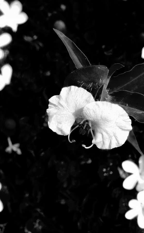 花卉 皇族释放例证