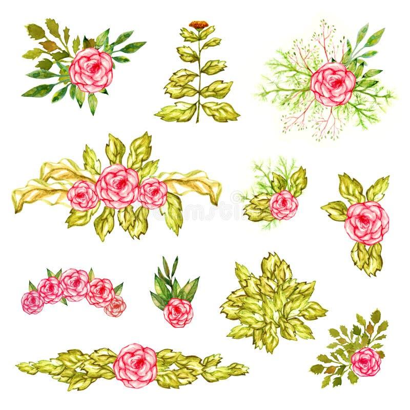 花反对桃红色玫瑰和金盏草美丽的夏天五颜六色的开花的水彩油漆叶子分支装饰集合孤立 皇族释放例证