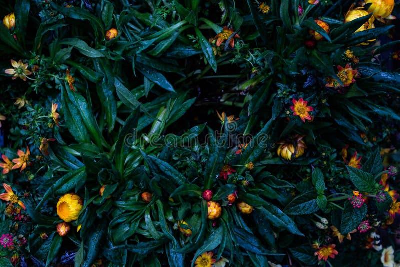 花和叶子混合 库存照片