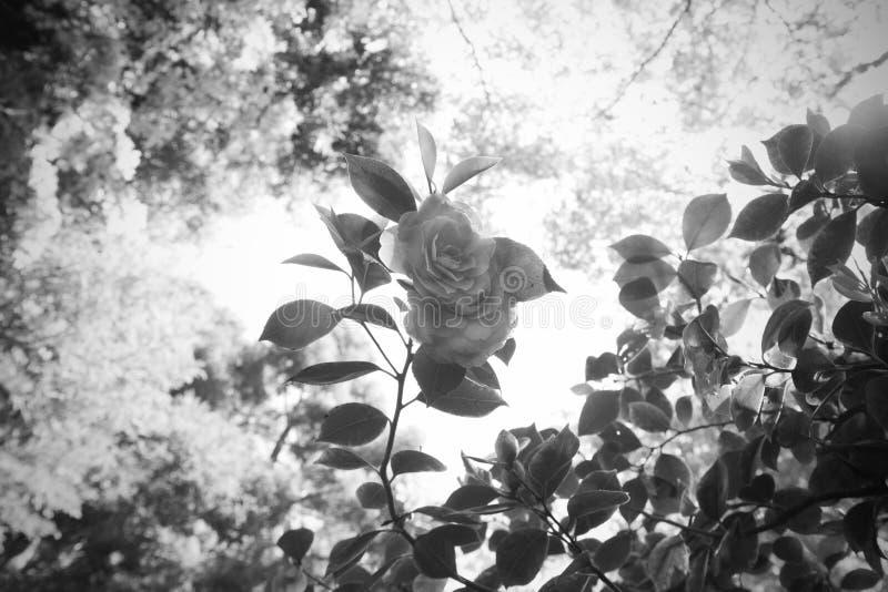 花和叶子视图从下面对树梢 库存照片