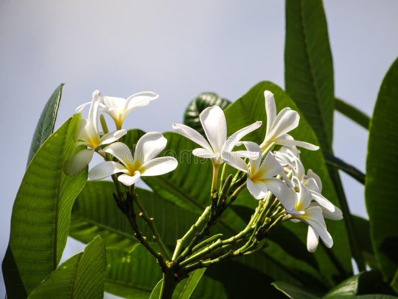 花和叶子 库存照片