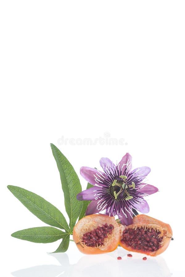 花和果子西番莲裁减草西番莲 免版税库存图片
