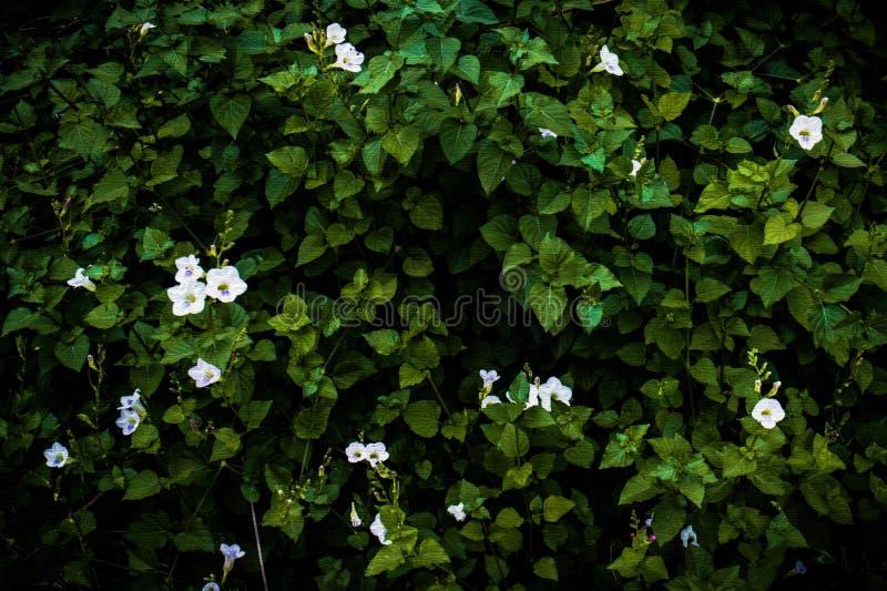 花和植物墙壁有绘画的看样式背景 免版税库存图片