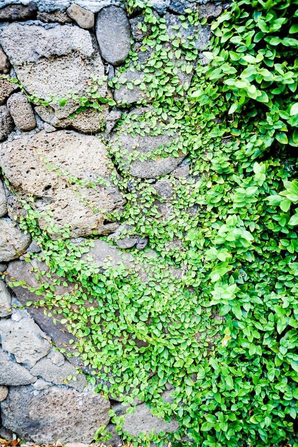 Download 花和植物背景 库存图片. 图片 包括有 自然, 环境, beauvoir, 特写镜头, 唯一, 问题的, 背包 - 59111309