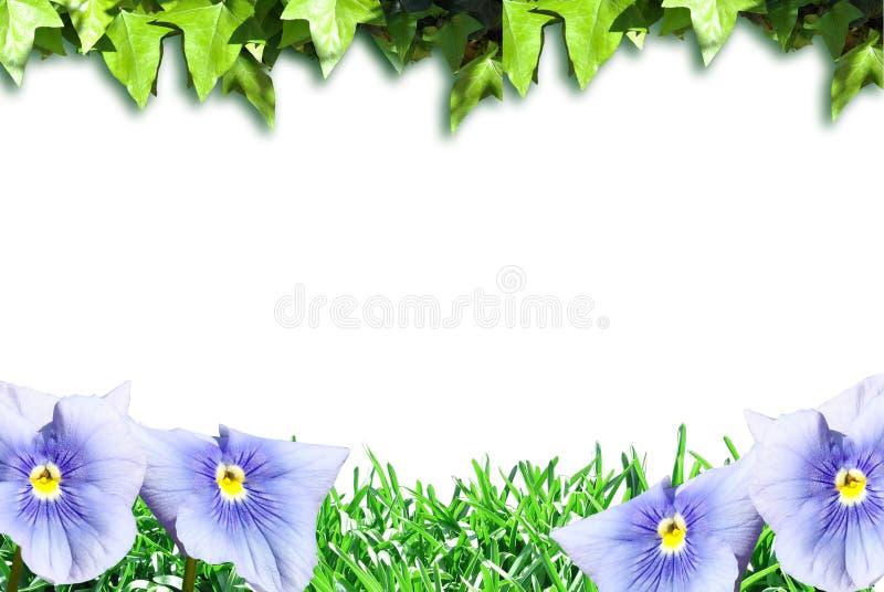 Download 花和植物 库存例证. 插画 包括有 绿色, 国界的, beautifuler, beauvoir, 开花 - 30336088