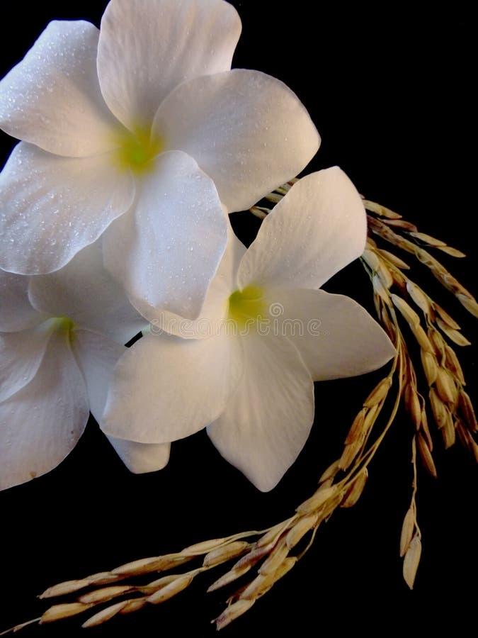 花和米 免版税库存照片