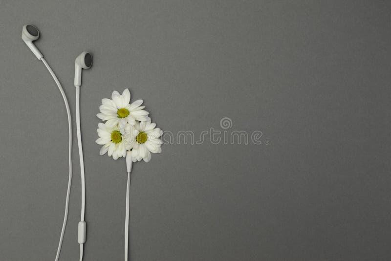 花和耳机,文本的地方 库存图片