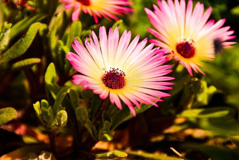 花和自然 图库摄影
