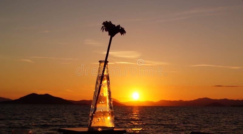 花和花瓶在日落 免版税图库摄影