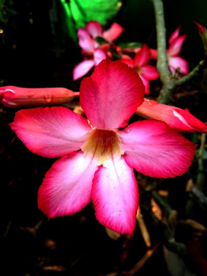 花和花 图库摄影