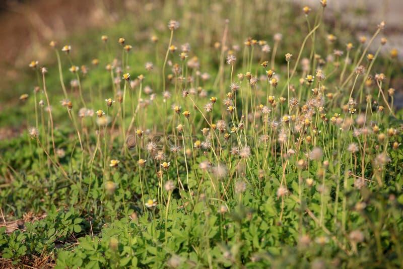 花和草背景的 库存图片