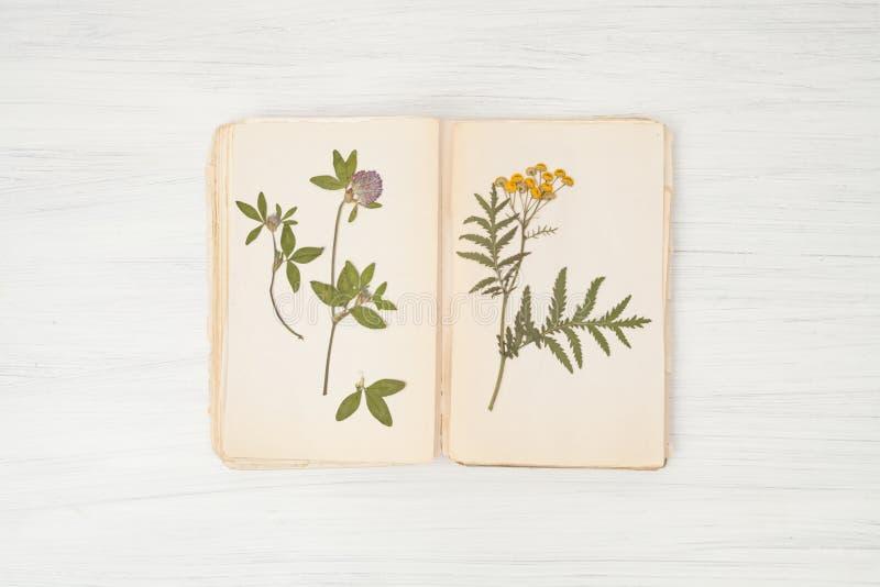 花和草,艾菊干燥标本集  免版税库存图片