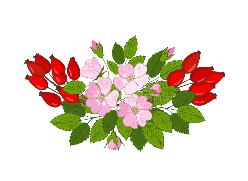 花和莓果石南木花束  dogrose的分支 向量例证