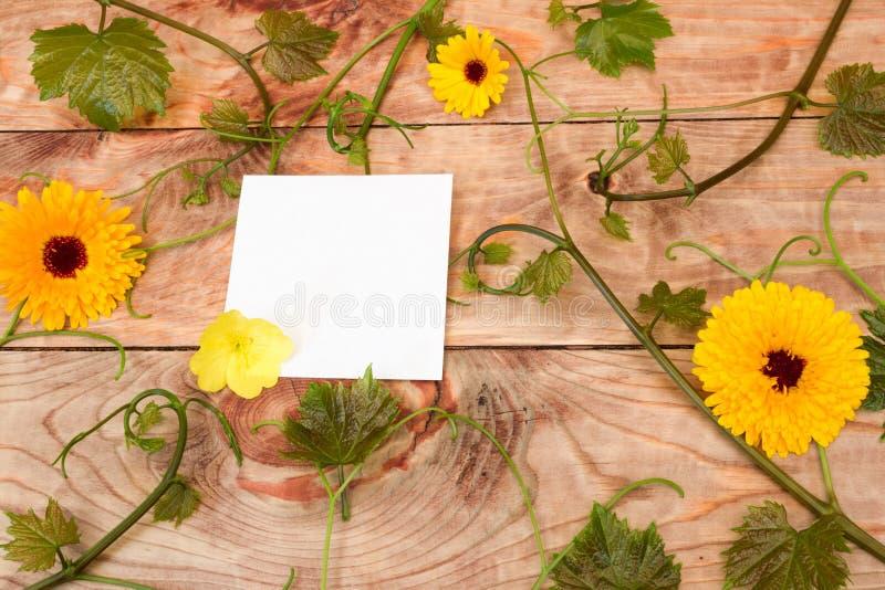 花和藤贴纸 库存图片