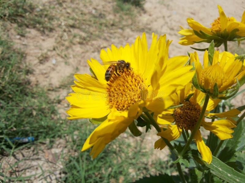 花和蜂在好射击的土地 免版税库存图片