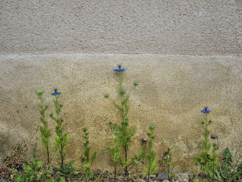 花和被风化的墙壁 免版税图库摄影