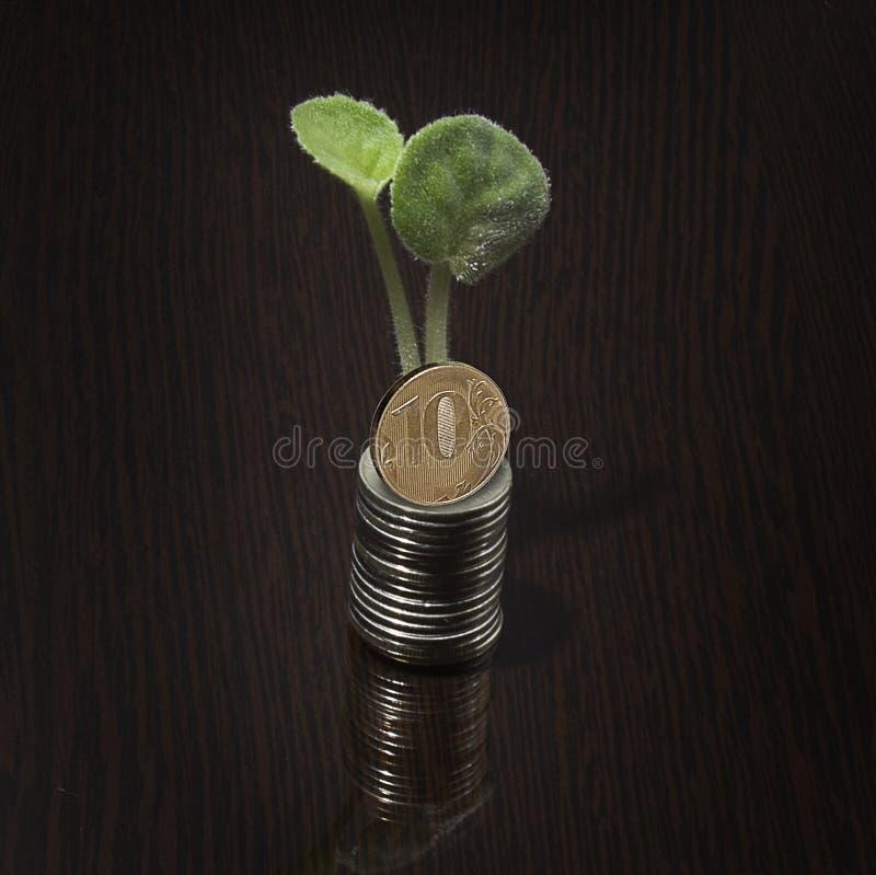花和金钱 库存图片