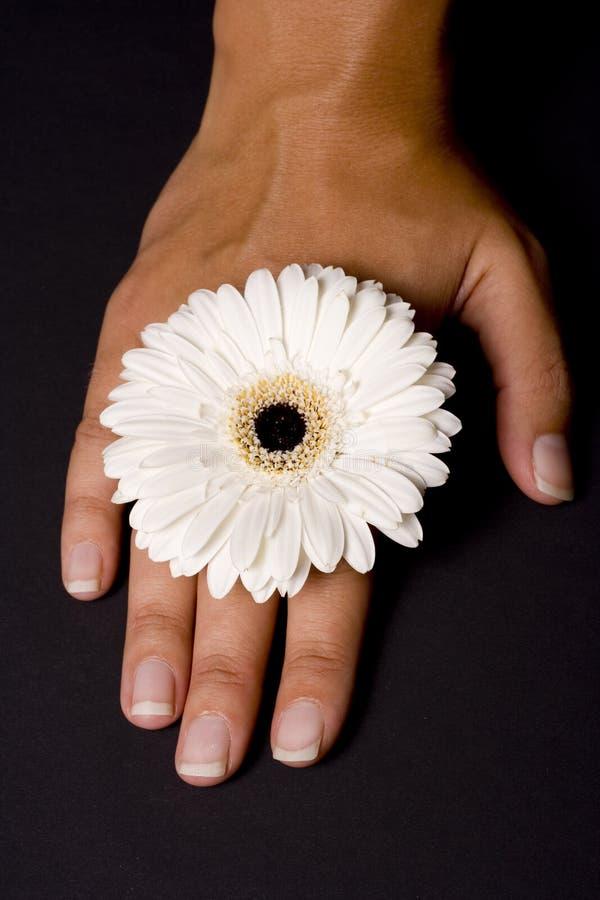 花喜欢环形戴着 免版税库存照片
