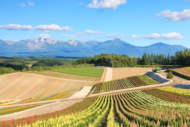 花园在上富良野,有山景在Furano,北海道日本 库存图片