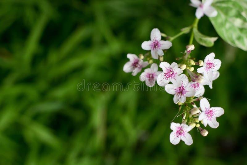 花园白色 图库摄影