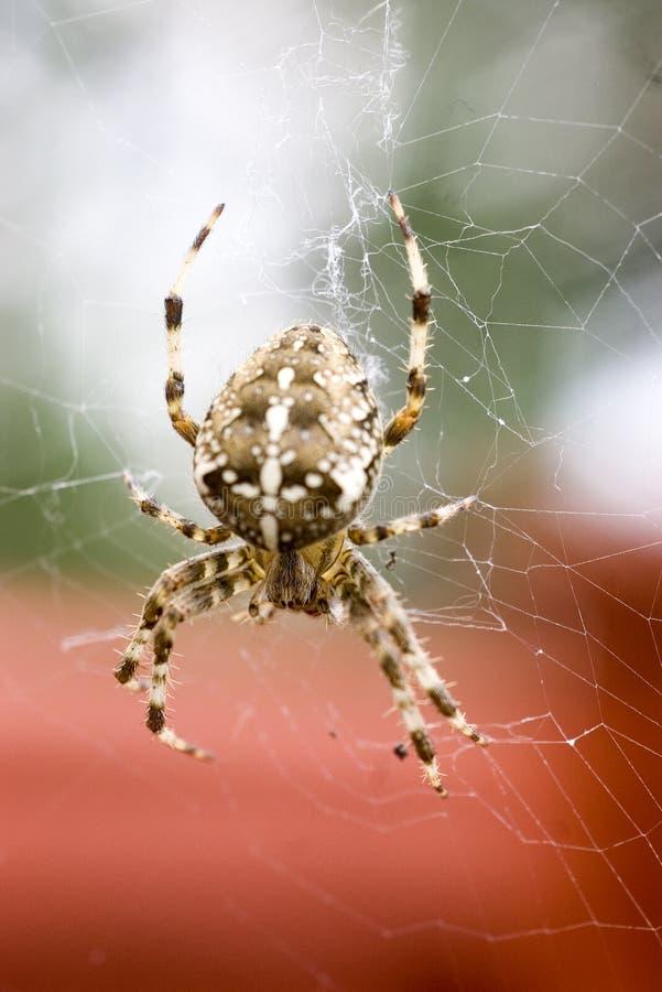 花园蜘蛛 免版税库存照片