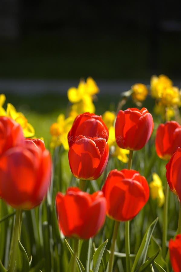 花圃 免版税库存照片