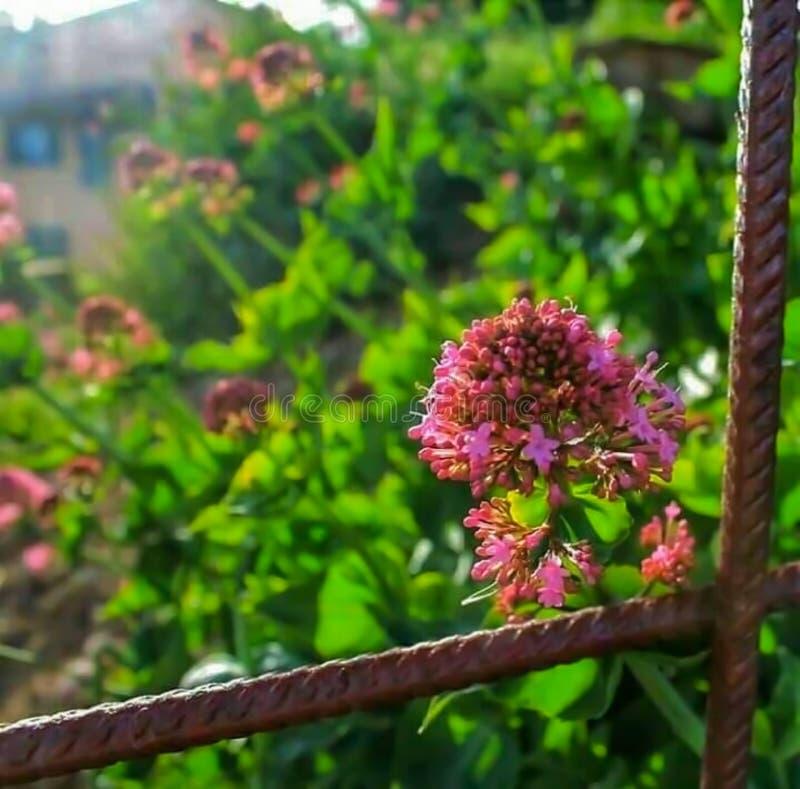 花在一个春日在中世纪村庄 库存照片