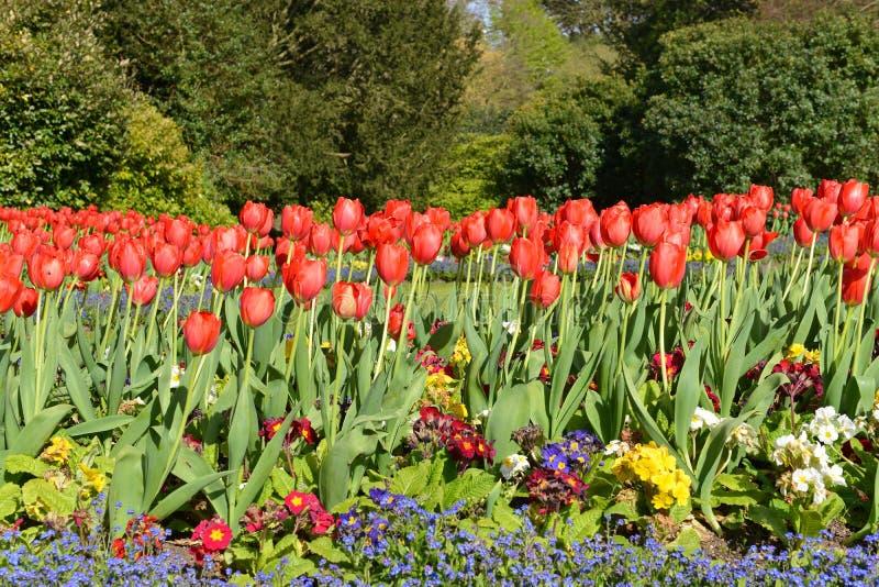 花在一个美丽的庭院里 库存图片