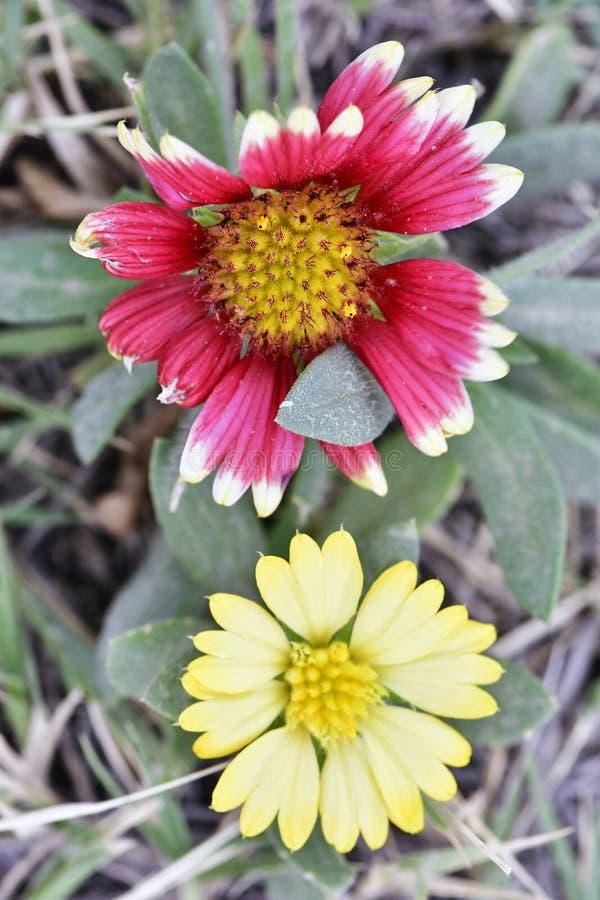 花在五颜六色的庭院里迷人和 库存图片