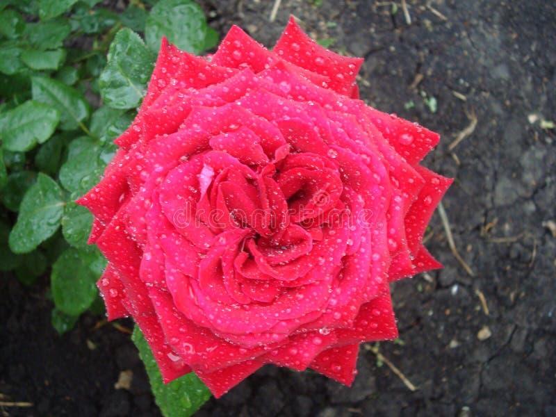花在庭院里 图库摄影