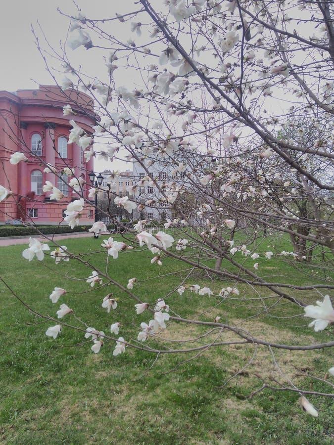 花在春天 库存照片