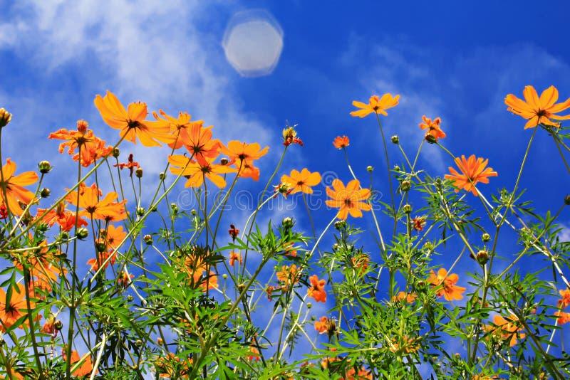 Download 花在春天 库存图片. 图片 包括有 草原, 草甸, 绽放, 救星, 开花, 春天, 绿色, 罗莎, beautifuler - 22355461