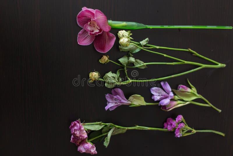花在木的黑暗变粉红色 库存照片