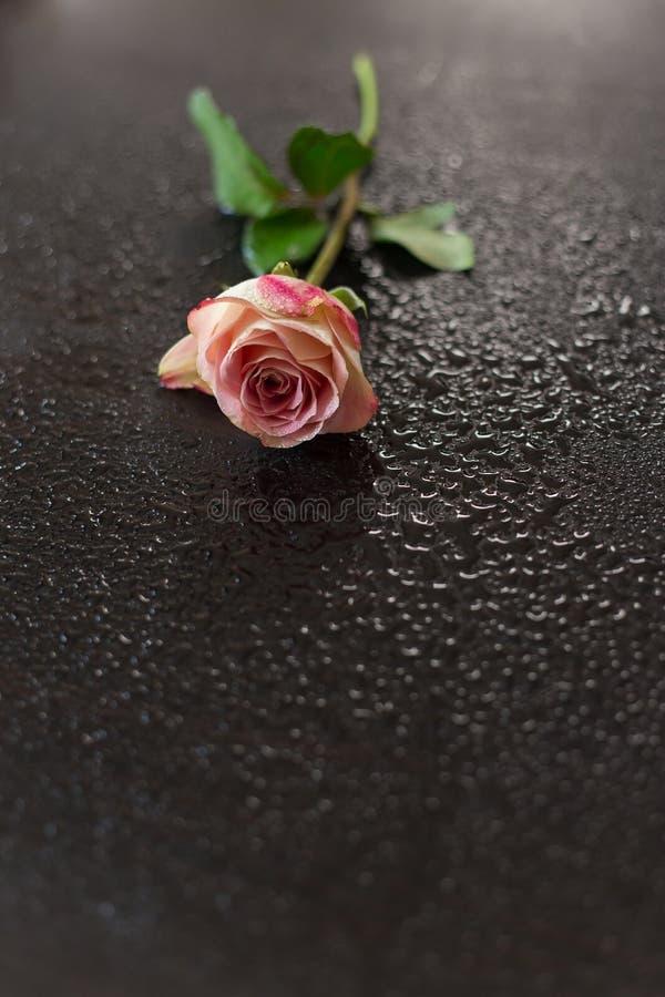 花在木的黑暗变粉红色 库存图片