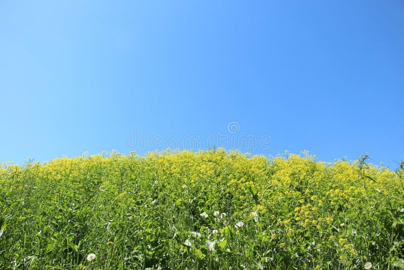 花在草甸 免版税库存照片