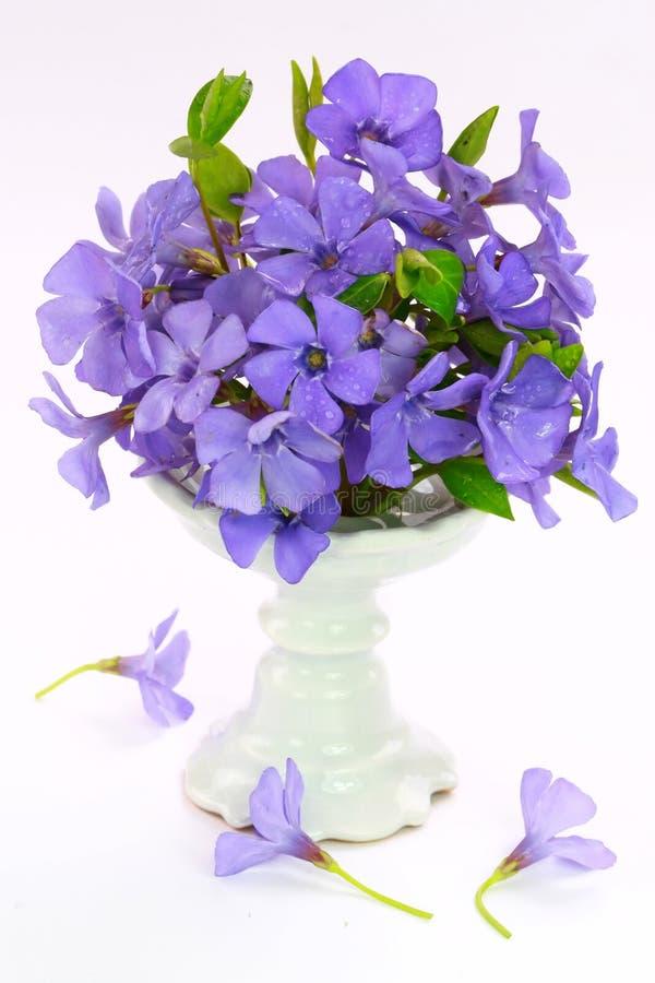 花小的紫罗兰 图库摄影