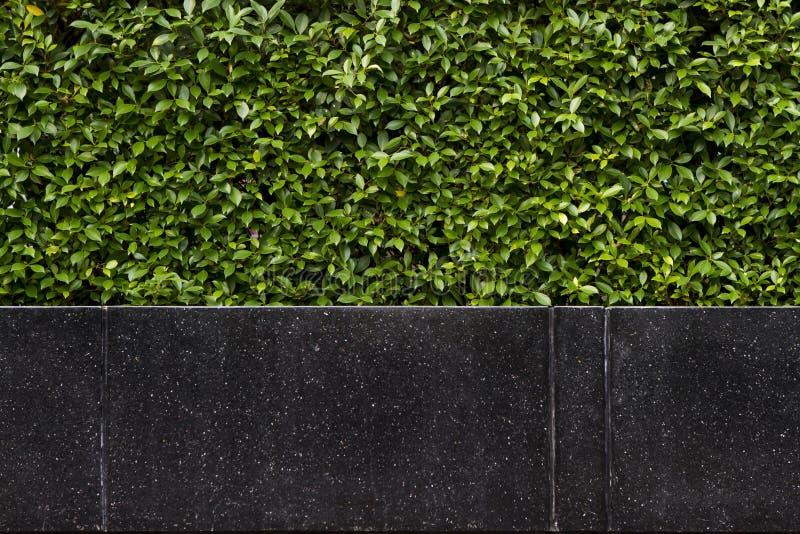 黑花岗岩石头长凳背景在树篱前面的 库存照片