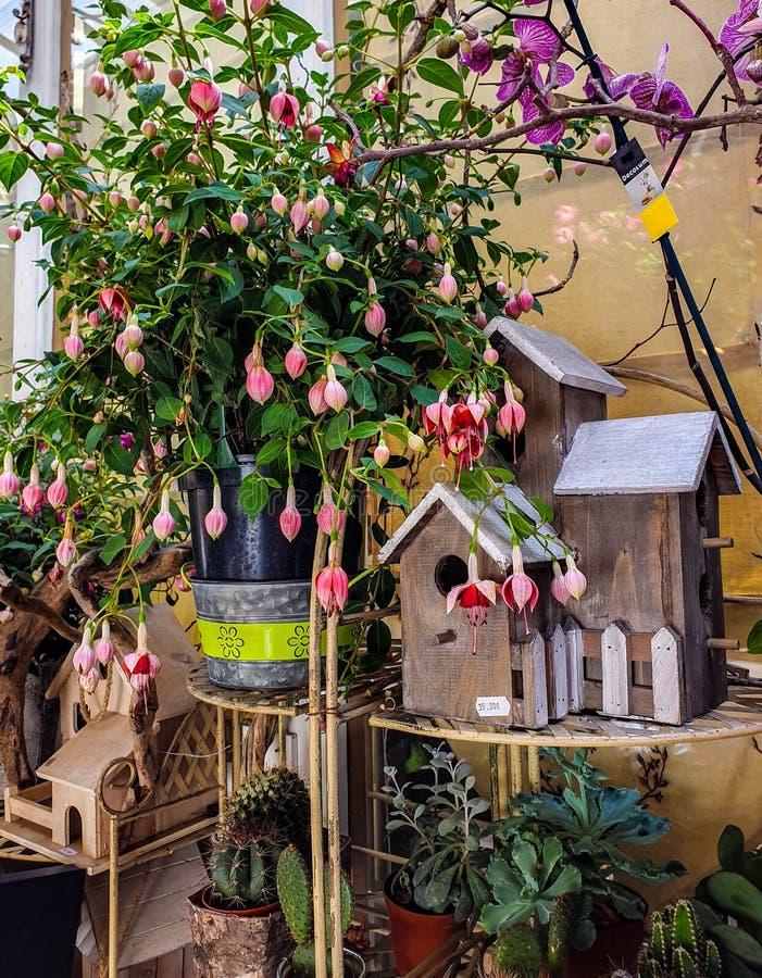 花市场在巴黎位于Ile de在巴黎圣母院和圣礼拜堂教堂之间的la Cite, 库存图片